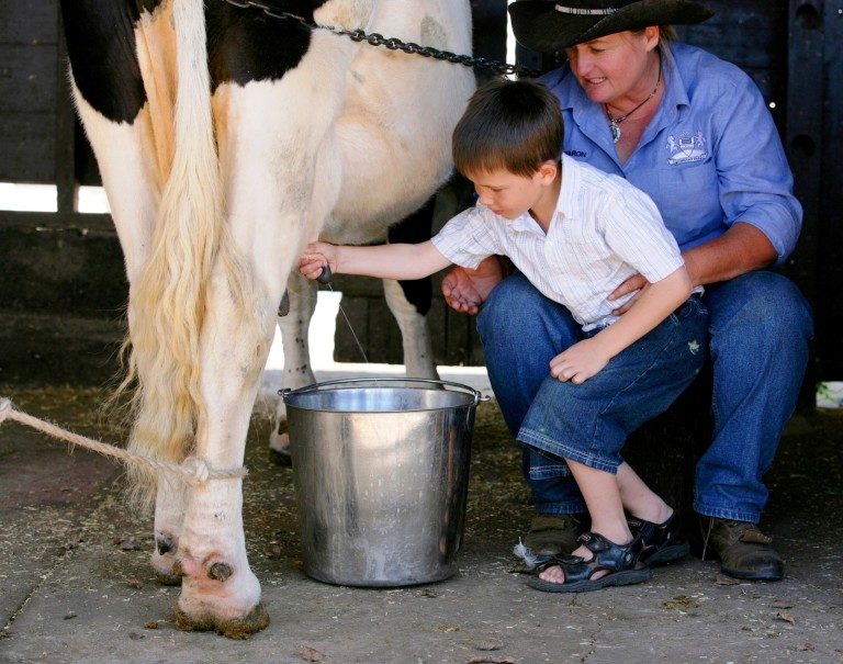 Cow-milking–768×605